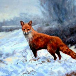 winter fox in snow co antrim approved for print 21.04