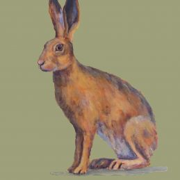 Grey Hare approved for print - Copy - Copy - Copy - Copy